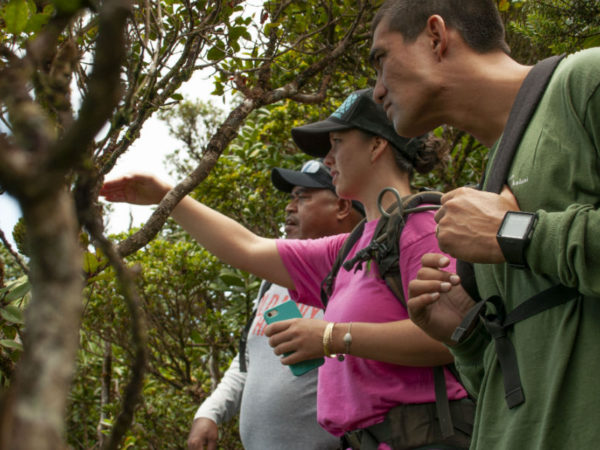 Pacific Resiliency Fellows learn about the flora and fauna of Kaala.