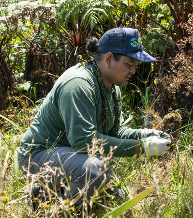 Pacific Resiliency Fellows Kalani Quiocho (Hawaii) removing invasive plants.