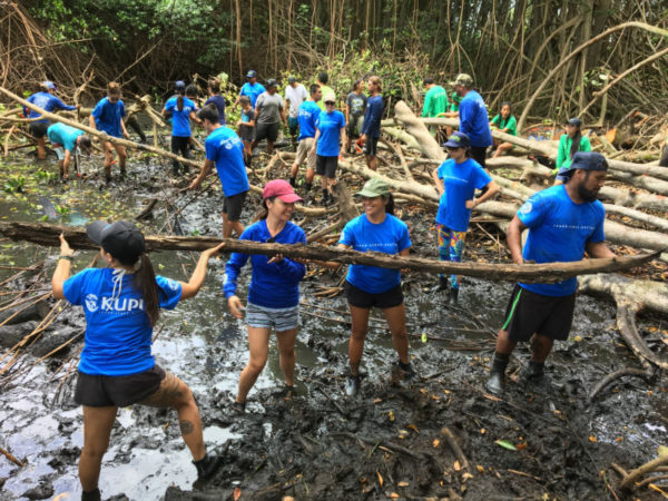 Removing mangrove at He'eia Fish Pond.