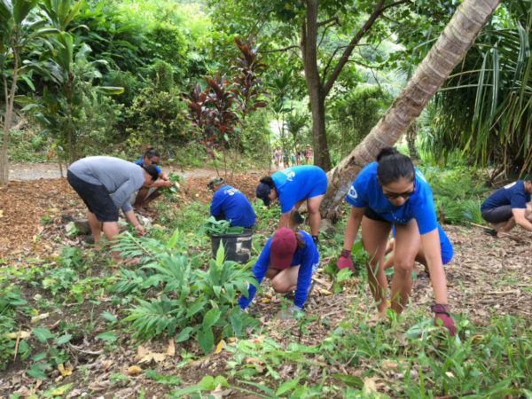 Fellows help to remove invasive plants at Papahana Kuaola.